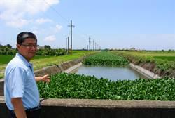 布袋蓮增生如草皮 水林鄉公所清除