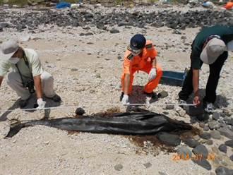 澎湖發現死亡保育類海豚