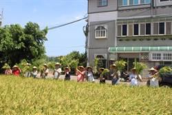 農陣助割 大埔農家歡喜收穫
