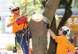樹藝師來台獻藝 示範行道樹修剪