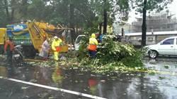麥德姆過境 中市環局出動清理