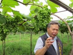 麥德姆颱風造成台中農災 農業局爭取補助