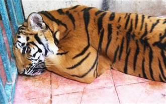 房屋传怪声 啊!是母老虎
