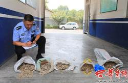 陝西工地發現錢窖 2千年古幣連夜遭哄搶