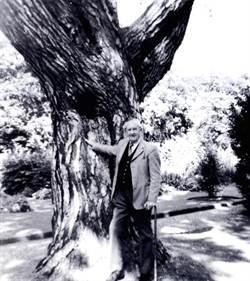 魔戒靈感來源 托爾金樹將遭砍除