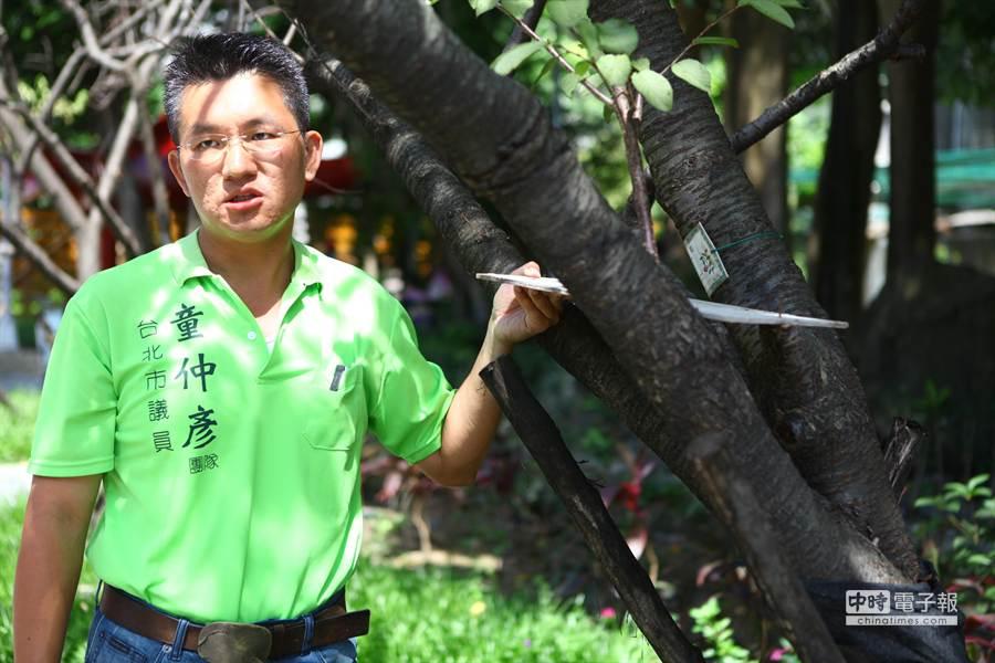 台北市議員童仲彥今天前往牯嶺公園,拿出日前廠商施工釘在樹上的木板,痛批根本是要置樹木於死地。(張立勳攝)