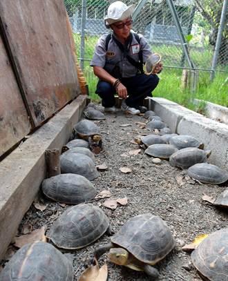 賊闖收容站 101隻食蛇龜被盜