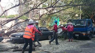 板橋光武街樹倒 壓2車 無人傷