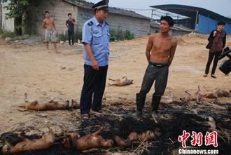 廣西柳州狗肉攤販露天燒狗 居民苦不堪言