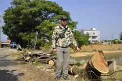 水利會埤塘工程砍樹 保育人士籲護樹