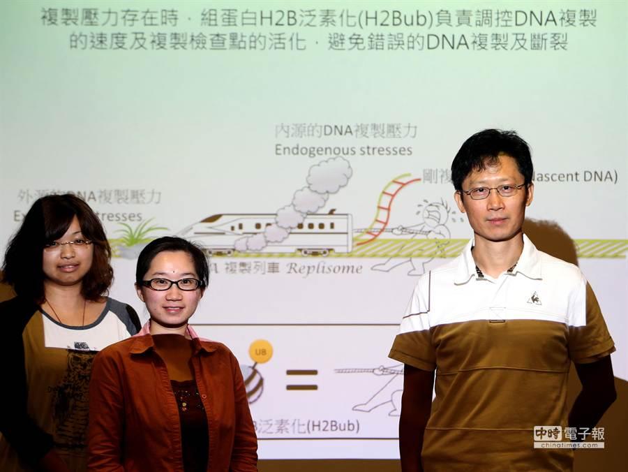 中研院細胞與個體生物學研究所高承福(右起)、林佳葉與吳孟穎研究團隊。(王英豪攝)
