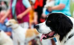 德去年寵物周邊花費 高達3400億台幣