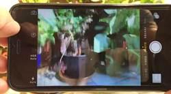 拍照總是模糊 iPhone 6 Plus鏡頭出包?