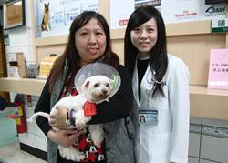犬隻腸道支架手術 興大創國內首例