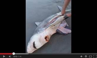 母鯊陳屍海灘 遊客剖腹救幼鯊