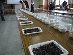冬季東方美人茶比賽 預估特等價格每斤20萬元以上