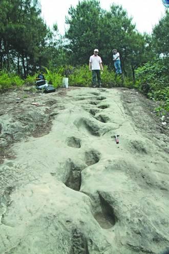 陸發現2億年前恐龍腳印 呈「內八字」