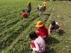 自己動手種蔬菜 學童體驗農作