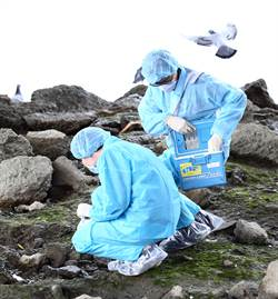 華江橋下野鴿棲息 防疫處消毒