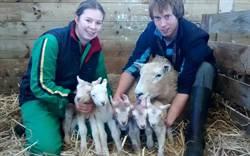 百萬分之一機率 母羊喜獲五胞胎