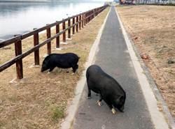 2山豬溪畔漫步 消防隊趕回