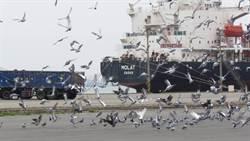 春節年關前 台中市府加強追查非法屠宰場