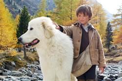 真人版《靈犬雪麗》 重拾經典溫馨
