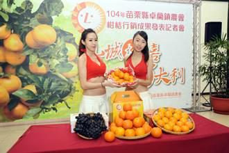 卓蘭柑橘葡萄盛產 邀你來採果