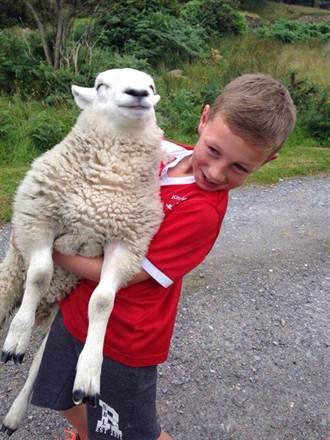 自以為是牧羊犬 小羊跑步超爆笑