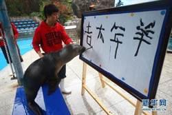 海獅嘴叼毛筆 寫「羊年大吉」