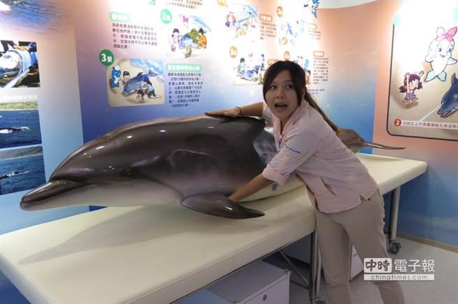遠雄海洋公園解說員謝易玲透過海豚模型,示範鯨豚擱淺時的救援步驟。(阮迺閎攝)