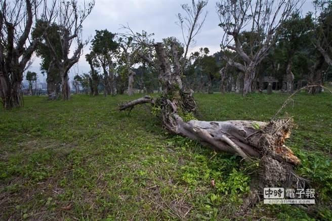 為了世大運,台北市已移植了將近4000棵樹。(圖片財訊提供)