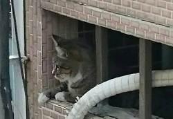 小毛孩很難管教?住宅設計貓咪化才是王道