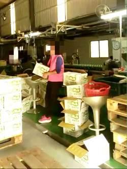 地下彈珠汽水工廠被抄 遭勒令停工