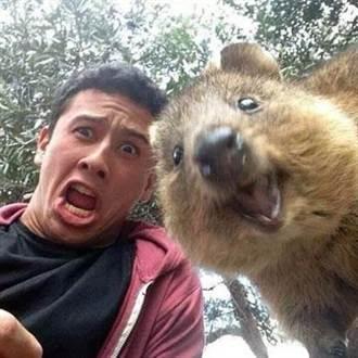 觀光客到澳洲 瘋搶找牠自拍