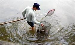新竹公園麗池內放捕撈網 害死龜.鱉