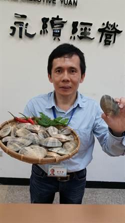 大蛤首創人工養殖 明年可望上市