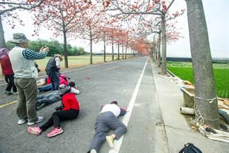 台南木棉花盛開 遊客躺馬路拍照