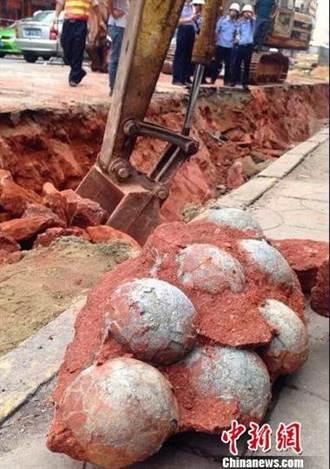 廣東河源市區  挖出43枚恐龍蛋化石
