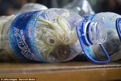 印尼海關破獲走私 24隻瀕危鸚鵡被塞寶特瓶