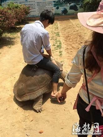 老龜被騎行掉淚 動物園究責