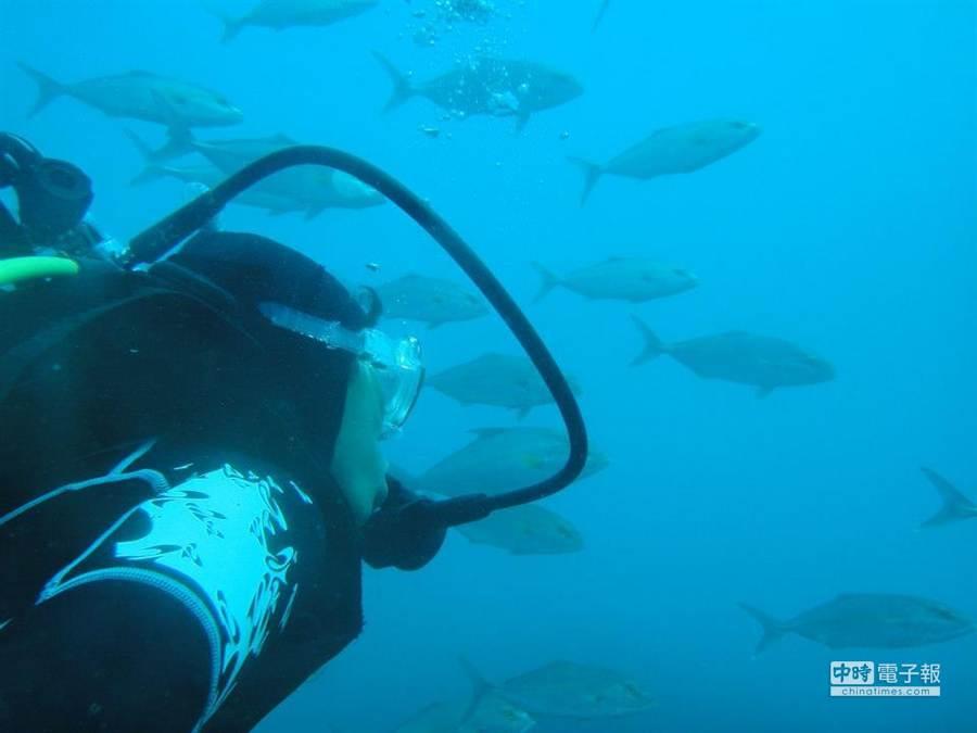 陳映伶喜歡海洋的無邊無際,在某次浮潛時偶然發現廢棄的九孔池內竟孕育無數生機。(陳映伶提供)