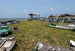 布袋蓮塞爆漁港 漁船遭淹沒