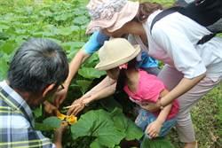 瓜農辦農事體驗營 教孩童幫雌花授粉