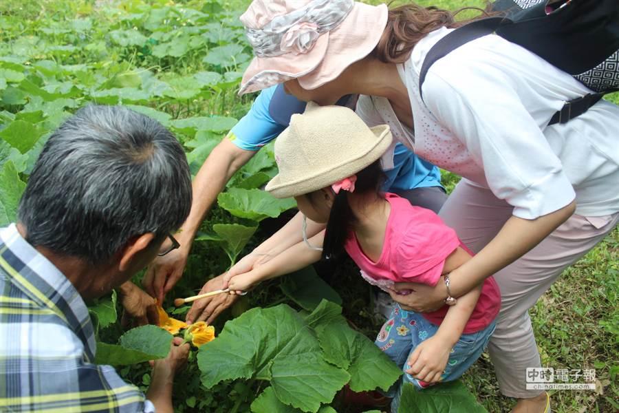 退休教官潘福田在造橋老家農田種植各式瓜類,目前是南瓜產季,規畫一系列種瓜農事體驗,圖為教導孩童如何幫雌花授粉。(黎薇攝)