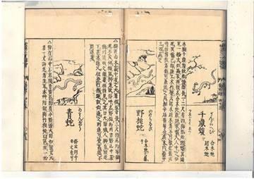 日本傳說中的生物 謎樣「野槌蛇」