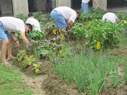 吸毒轉無毒 受戒治人學習無毒蔬菜栽種技術