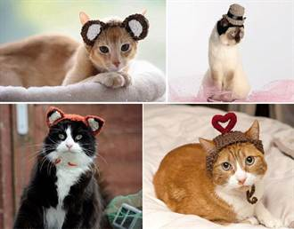 英國貓帽設計師  讓喵星人萌翻天