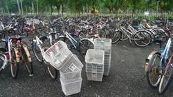 東華學生組「單車合做社」廢棄單車獲新生