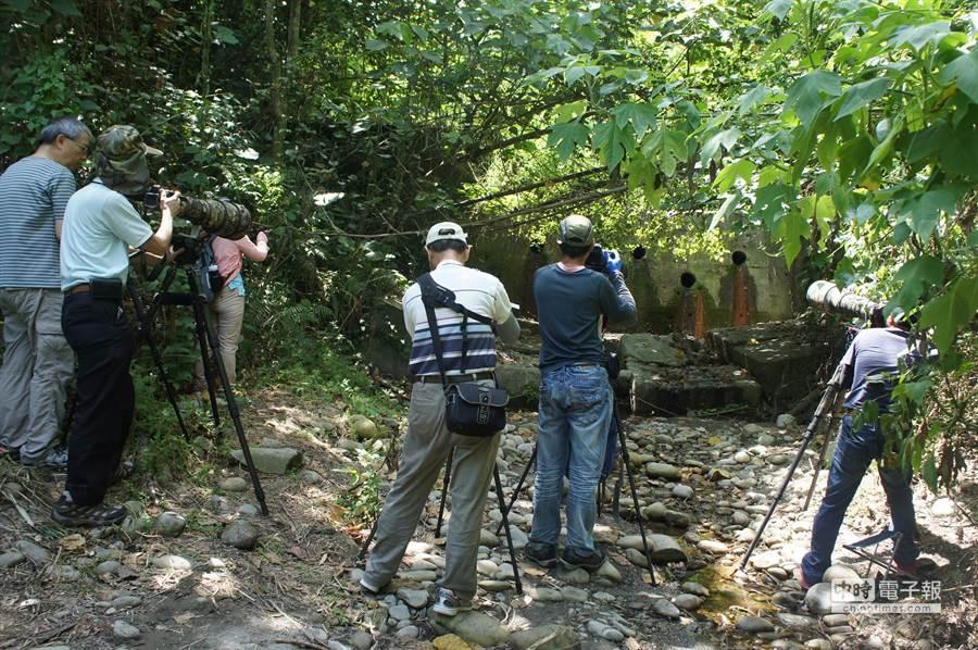 龍過脈步道的八色鳥棲地附近,有一攔沙壩是所有鳥類洗澡之地,最近每天都有好「攝」之徒,等待八色鳥洗澎澎的鏡頭。(周麗蘭攝)